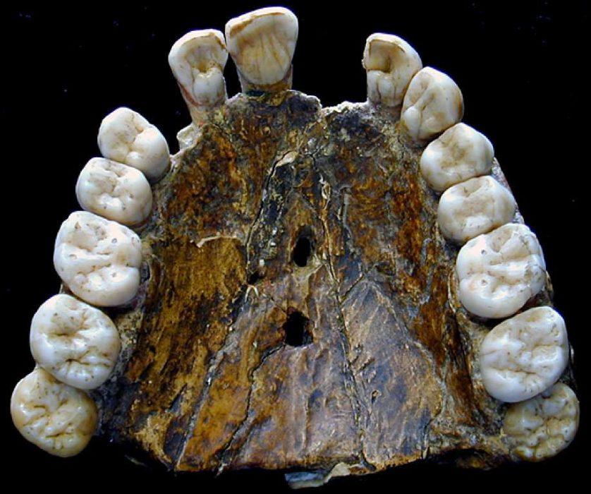 neandertais 7