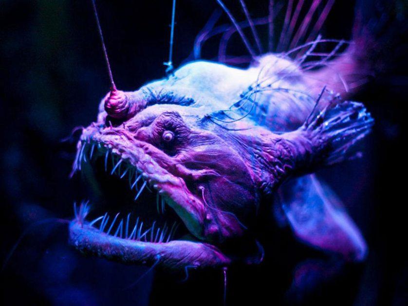 assustadoras-criaturas-marinhas-5
