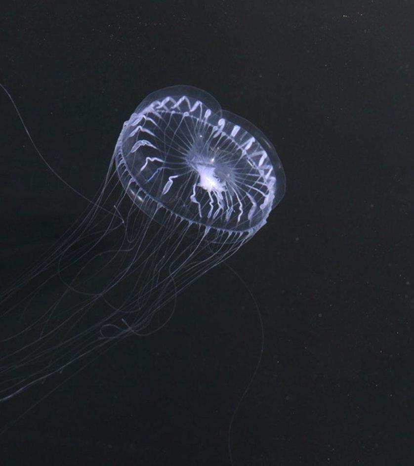assustadoras-criaturas-marinhas-9
