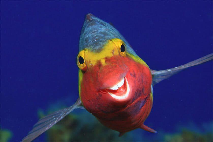 Foto engraçada de um peixe