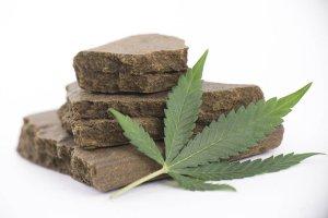 hashish cannabis