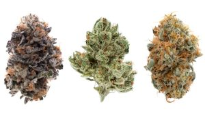 best seed bank in colorado USA
