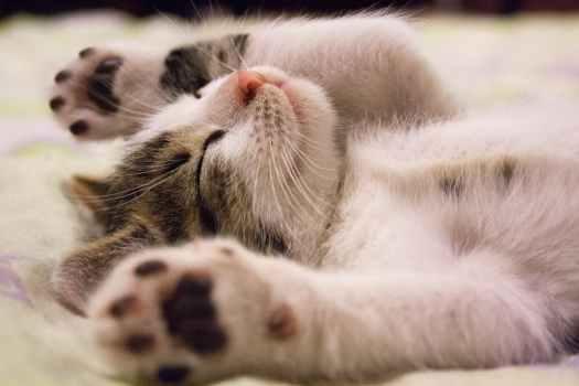 Schlafen, Schlafmangel, Stress