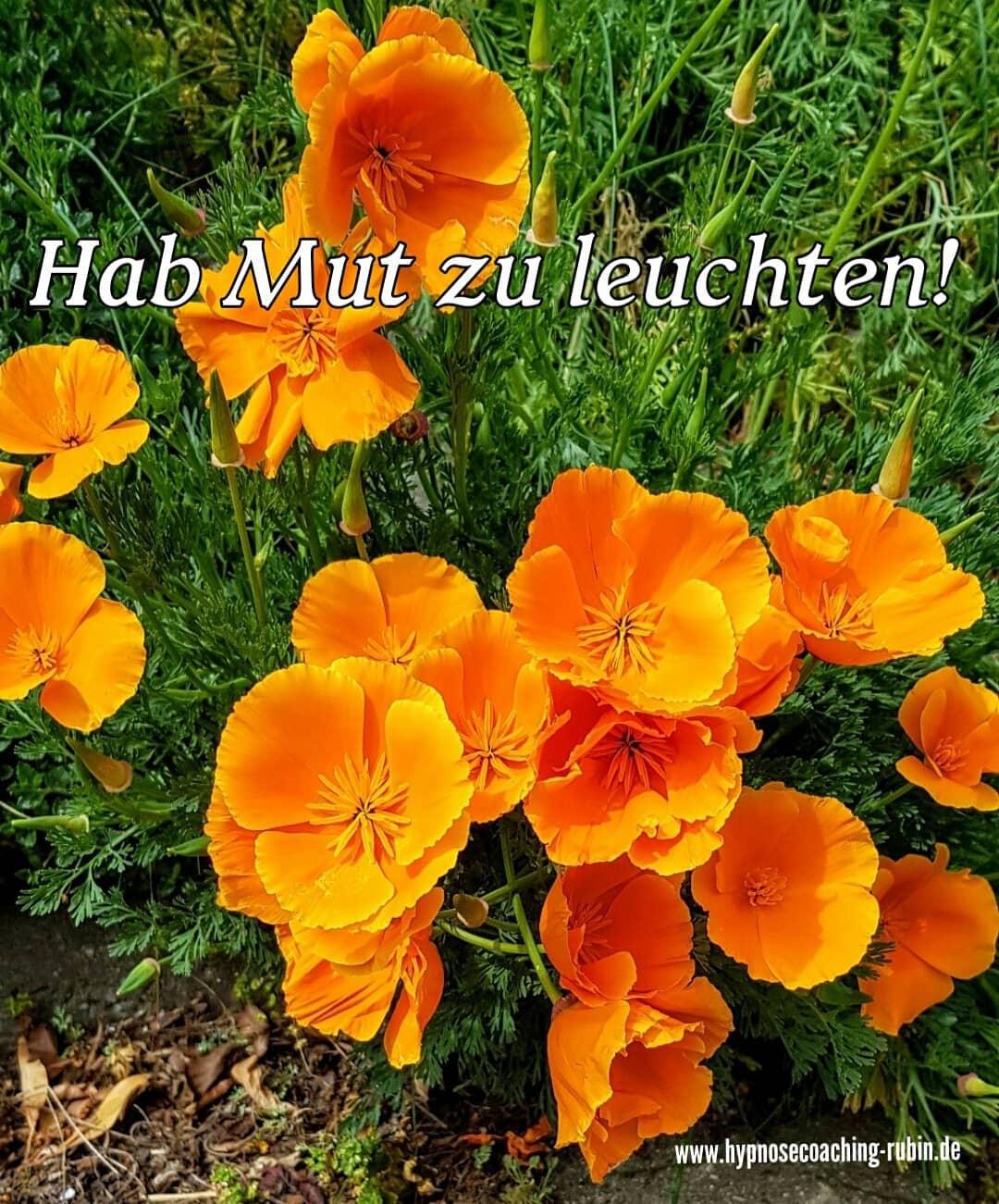 Hab Mut zu leuchten | Blog | Hypnose Coaching Aachen