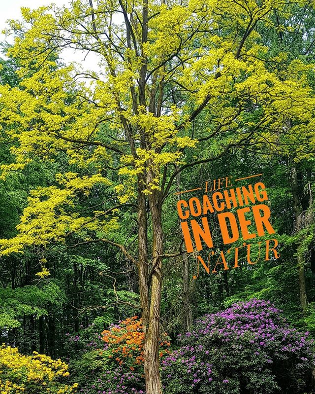 Live coaching in der Natur