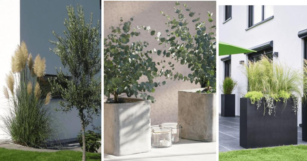 Inspiration Garten & Balkon Pflanzen