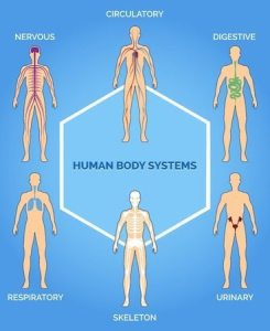 medical photos of endocrine system