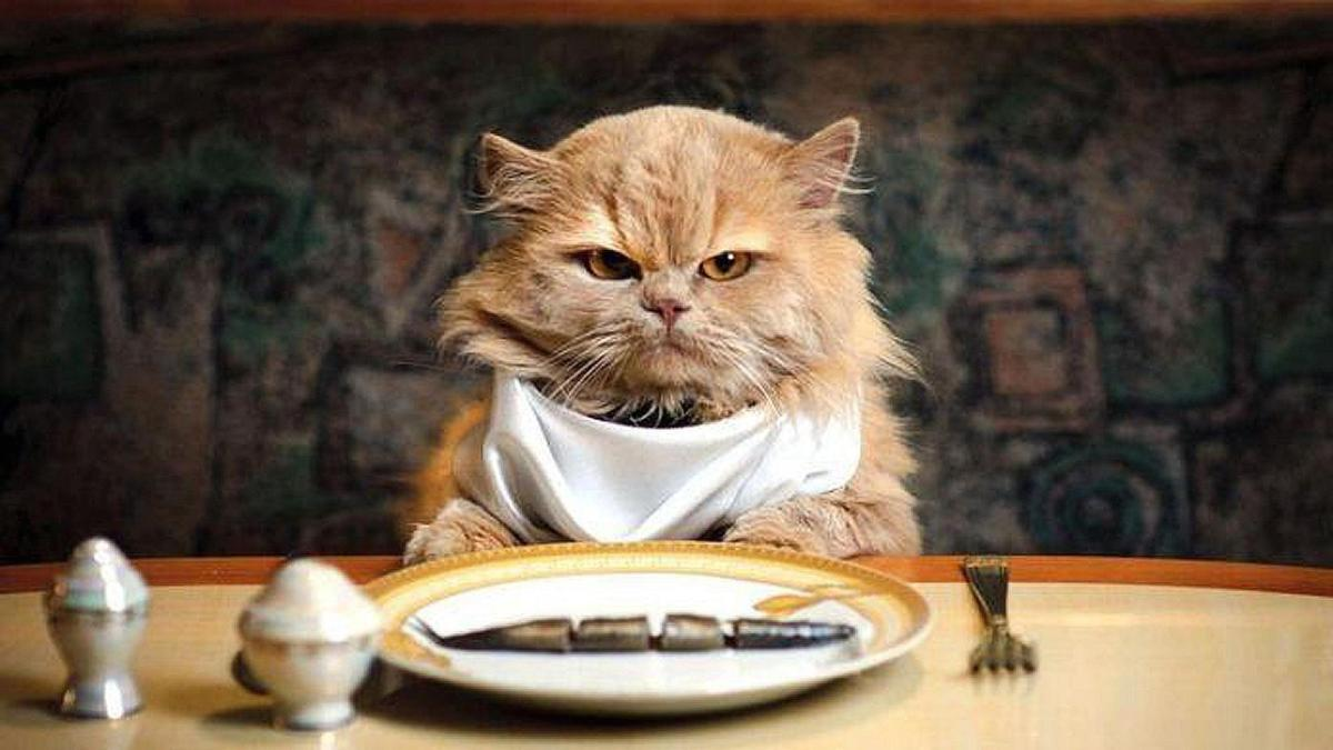 5 Favorite Human Foods that Cats can Eat