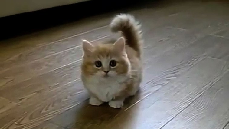top 5 most viewed cat videos on youtube