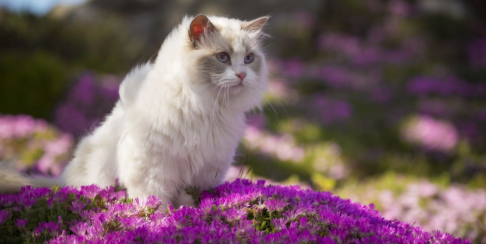 Top 7 Reasons Why Cat is the Most Favorite Pet in the World