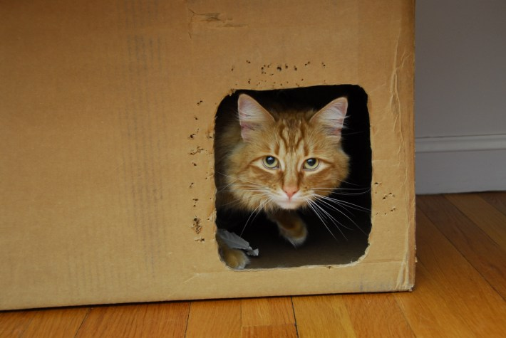 image-result-of-cat-in-box