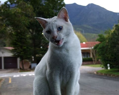 image_result_of_cat_talking