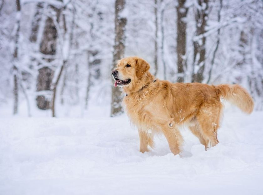 image-result-of-dog-in-snow