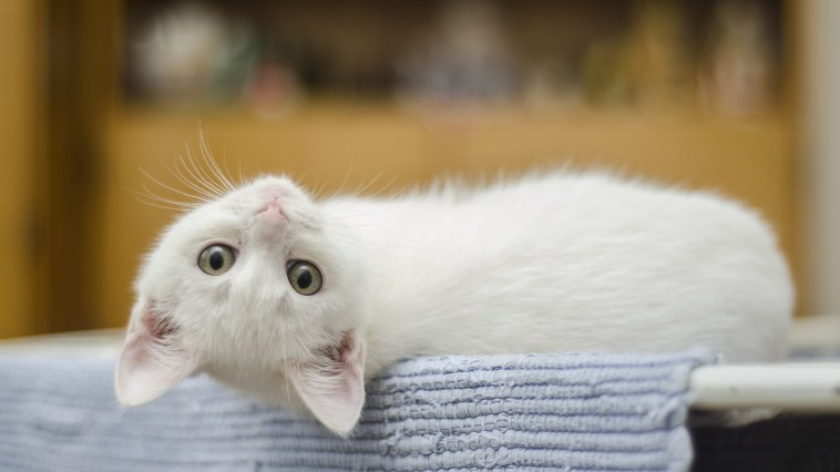 image-result-of-cute-cat