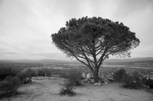 The Wisdom Tree.