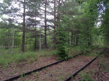 Hylättyä rataa metsässä.
