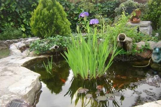 Le Coeur Du Jardin Les Plus Beaux Bassins Journal Des