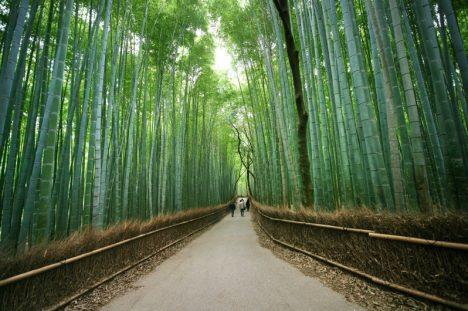 Japan, Arashiyama, Bamboo Forest