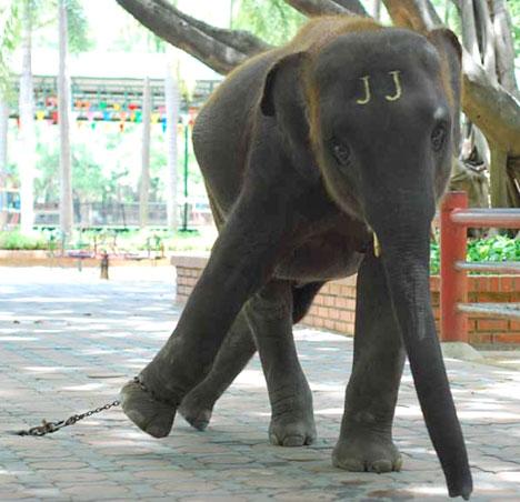 Animal cruelty very common in Thailand