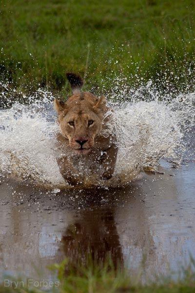 Top 15 Best Tourist Photos Lioness