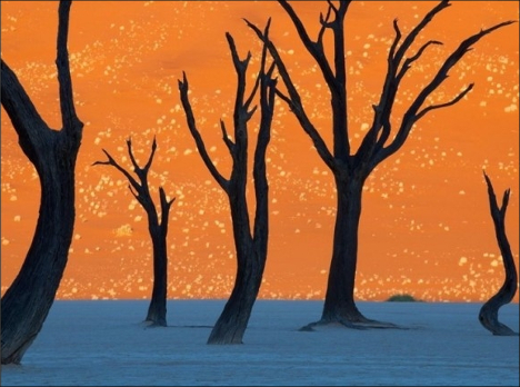 Deadvlei Desert Namibia fake or real?
