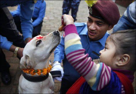 Dogfestival Nepal 3