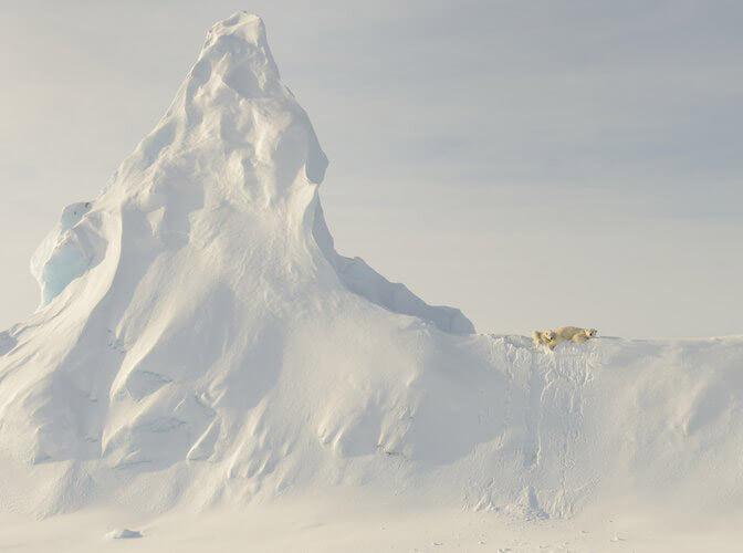National Geographic travel photos year icebears