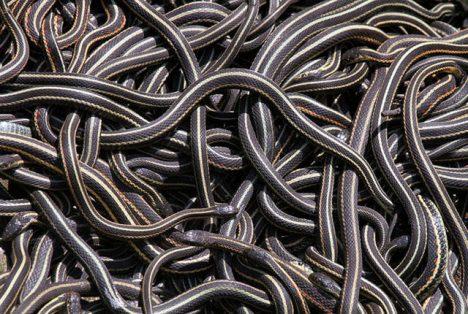 Narcisse Snake Pits Manitoba Canada