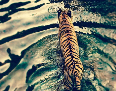 Ranthambore Tiger Reserve India