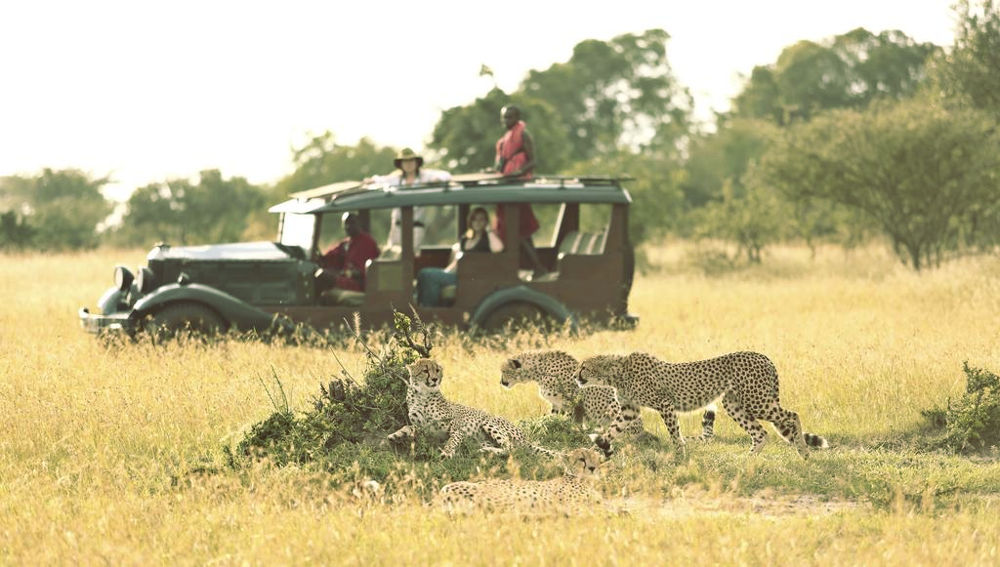 Cottars 1920s Camp. Cheetahs on the catwalk.