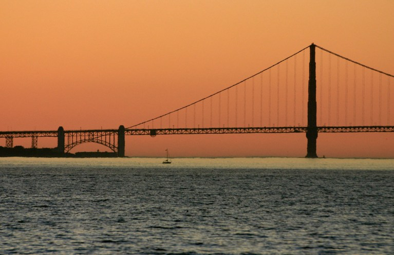 If you're going to San Francisco. Photo by The Travelling Chili.