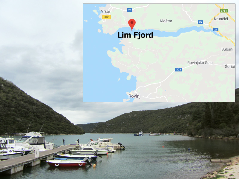 Lim Fjord dolphins