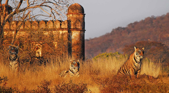 Ranthambhore Tiger Reserve India