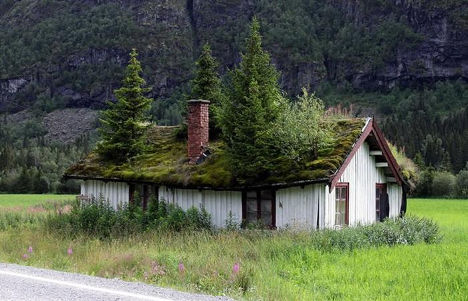 Cabin with Tree Rooftop Latitude Longitude