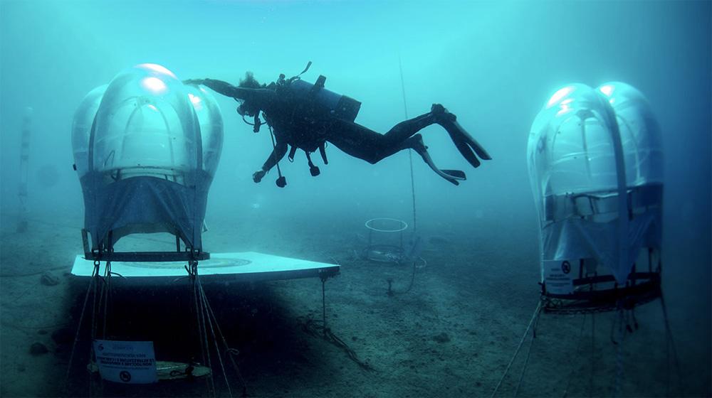 Underwater Veggies Nolis Bay