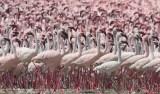 Weird Places Lake Natron Tanzania