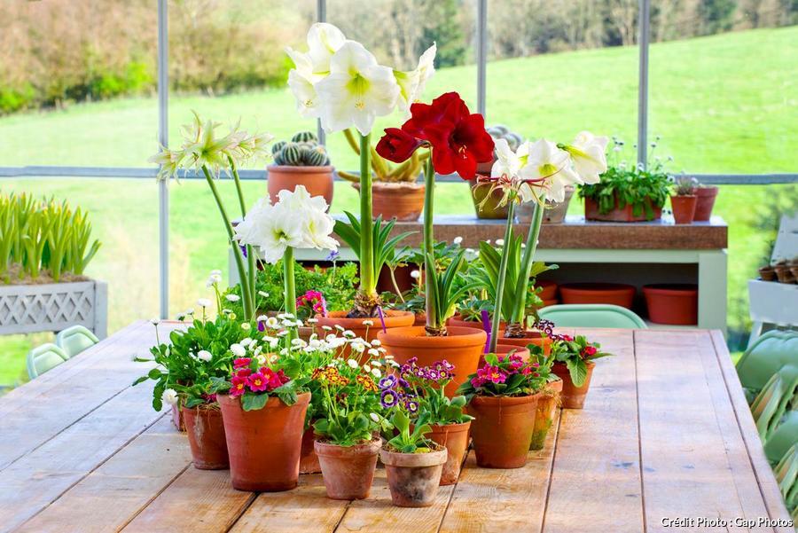 faire refleurir les plantes d interieur