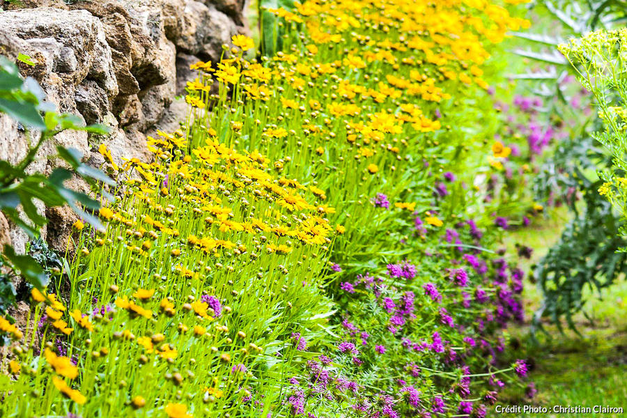 Les Plus Belles Plantes Pour Des Bordures Qui Fleurissent Longtemps Detente Jardin