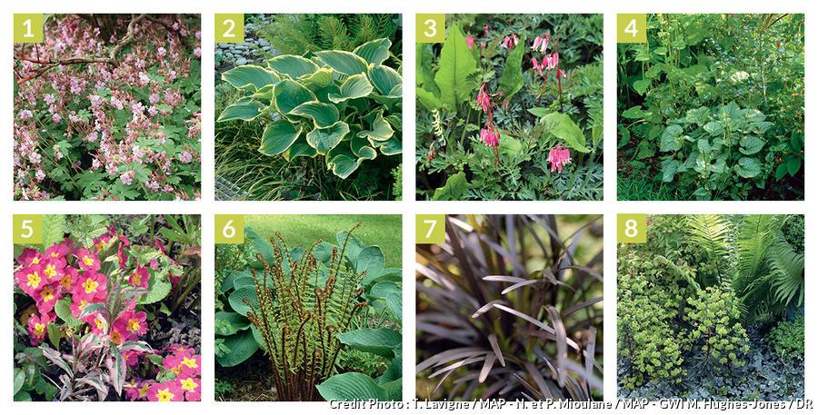 plantes vivaces couvre sol vivaces d