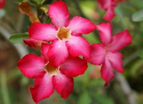 tropical-flowers-4 b