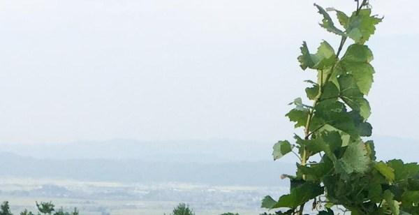 ぶどう畑から見える喜多方地域