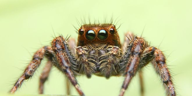 What Does it Mean to Have a Spider as Your Spirit Animal?