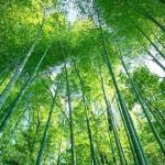 山梨の竹林伐採