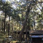 山梨県で台風による倒木