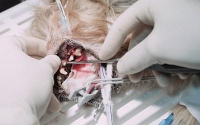 I-VET a la cabeza como centro de formación maxilofacial