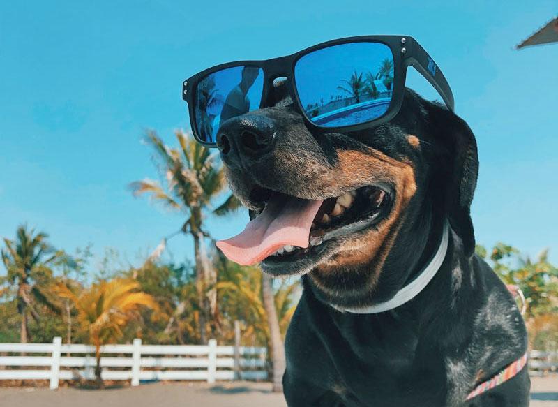 Golpe de calor – Hipertermia en perros