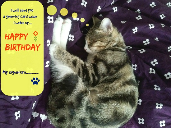 Sleeping Kitty Birthday Wish Free Belated Birthday Wishes ECards 123 Greetings
