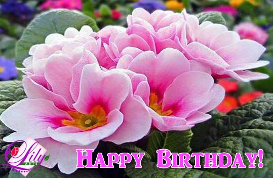 May This Birthday Be Filled With Free Flowers Ecards