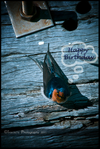 A Little Bird Told Me Its Ur Bday Free Happy Birthday ECards 123 Greetings