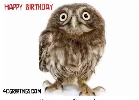 Happy Birthday Owl Greetings Free Happy Birthday Ecards Greeting Cards 123 Greetings